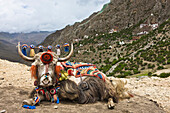 Yak in Drak Yerpa, Tibet, China, Asia