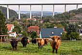 German Autobahn, A4, Werratal bridge, valley, houses, Highland cattle, farmland, motorway, highway, freeway, speed, speed limit, traffic, infrastructure, Germany