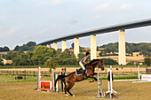 horse and rider, farming landscape, under Autobahn Ruhrtal Bridge, bridge A52, German Autobahn, motorway, freeway, speed, speed limit, traffic, infrastructure, Mühlheim, Germany