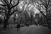 In the Central Park, New York City, New York, USA