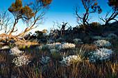 Vegetation on the shores of Lake Geirdner, Lake Geirdner, Australia, South Australia