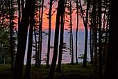 Buchenwald on the Chalk Coast, Jasmund National Park, Ostseekueste, Insel Ruegen, Mecklenburg Vorpommern