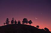Chapel, monk, cedar trees, moon at dusk, Troodos Mts   Cyprus