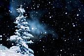 schneebedeckte Fichte und Schneeflocken, Feldberg, Schwarzwald, Baden-Württemberg, Deutschland