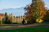 Landscape with colourful trees in fall, autumn, spruce, beech, birches, Upper Bavaria, Alps, Germany, Europe