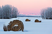 Snow covered frosty hay bales in a snow covered field with frosty trees and snow covered mountains at the glow of sunrise, Alberta, Canada