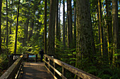 Person standing on a viewing platform in Cathedral Grove, MacMillan Provincial Park, British Columbia, Canada