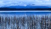 Dawn at Lake Mahinapua, Hokitika, South Island, New Zealand
