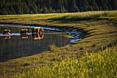 Alaskan coastal bear ursus arctos sow and cubs wading in shallow water, Lake Clark National Park, Alaska, United States of America