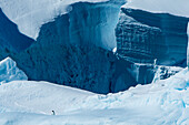 Frozen ice cliffs with one lone penguin, Antarctica