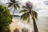 Two palm trees on the beach with sun flare, St. Croix, Virgin Islands, United States of America