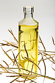 A glass bottle of canola oil with dried canola seed pods on a white background, Calgary, Alberta, Canada