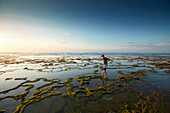 Stand at low tide, Balangan, Bali, Indonesia