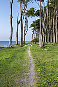 Path along the cliffs and beech forest in Nienhagen, Baltic Sea Coast, Mecklenburg-Western Pomerania, Northern Germany, Germany, Europe