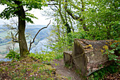 Place to rest, made of an oak tree (Quercus petraea) with the view past a common hornbeam (Carpinus betulus) tree to lake Edersee Lake Edersee, Hesse, Germany, Europe