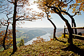 View of Lake Edersee from Kahle Hard Route viewpoint near Bringhausen in Kellerwald-Edersee National Park with sessile oak trees (Quercus petraea) in autumn, Lake Edersee, Hesse, Germany, Europe