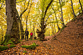 Gisonen trail on the hill of the early medieval Hollende castle deep in the Burgwald beech forest Burgwald-Ederbergland, Hesse, Germany, Europe
