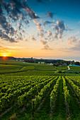 Weinberge zwischen Hagnau und Meersburg, Sonnenaufgang, Wolkenhimmel, Bodensee, Baden-Württemberg, Deutschland