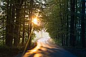 Road through a forest on an autumn day, Allgaeu, Bavaria, Germany