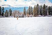 Deer standing in snowy field