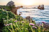 Flowers on rocks near ocean