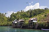 Traditionelle Haeuser auf Stelzen, Gam, Raja Ampat, West Papua, Indonesien