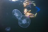 Moon Jellyfish, Aurelia aurita, Raja Ampat, West Papua, Indonesia