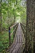 Holzbrücke im Wald des Naturreservats am Vänernsee, Västergötland, Schweden