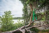 Ein Kind klettert in einer Kiefer am Rand des Vänernsees, Västergötland, Schweden