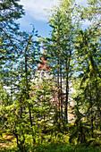 Blick durch grüne Nadelbäume auf ein Holzzelt, Öregrund, Uppsala, Schweden