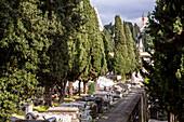 avenue of trees, Monumental Cemetery of Staglieno, Genoa, Liguria, Italy
