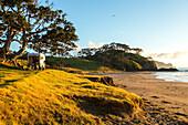 idyllic camping location, shady old Pohutukawa tree, empty beach, 4WD Campervan, Campsite, Elliot Bay, North Island, New Zealand