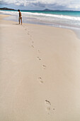footprints in sand on beach with person, pristine beach, high format, Karikari Peninsula, North Island, New Zealand