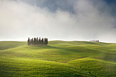 Tuscan hills of the Val d'Orcia with cypress grove in the morning sun with fog in spring, San Quirico d'Orcia, Tuscany, Italy