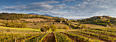 Panoramic view over vineyards and Tuscan landscape in the evening sun, Val d'Orsia, province of Siena, Tuscany, Italy