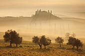 Tuscan landscape with a villa and cypress trees in the morning mist and sun, pasture with poppies and olive trees in the foreground, San Quirico d'Orcia, Val d'Orcia, Siena Province, Tuscany, Italy