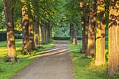 Lime tree avenue near castle Augustusburg in Bruehl, Middle Rhine Valley, North Rhine-Westphalia, Germany, Europe