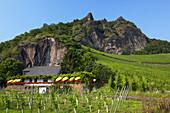 Wine house Domstein underneath the rocks of Drachenfels in Koenigswinter, Middle Rhine Valley, North Rhine-Westphalia, Germany, Europe