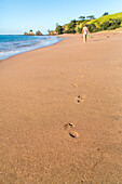 footprints in sand on beach, pristine beach, barefoot, high format, Tauranga Bay, Northland, North Island, New Zealand