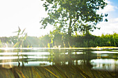 Kayak tour on the river Spree, Water Surface, Spreewald, Biosphere Reserve, Summer, Cultivated Land,  Brandenburg, Germany