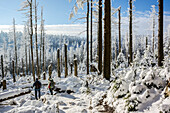 Winter landscape with Forest, Schierke, Brocken, Harz, Harz national park, Saxony, Germany