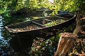 Old boat on the river Spree full of leaves, Biosphere Reserve, Autumn, Cultural Landscape, Spreewald, Brandenburg, Germany