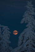 Full moon and Winter landscape, Schierke, Brocken, Harz national park, Saxony, Germany