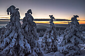 Evening sun and Winter landscape, Schierke, Brocken, Harz national park, Saxony, Germany