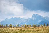 Fellhorngrat, Bergpanorama, Urlaub, Sommer, Oberstdorf, Oberallgäu, Alpen, Deutschland