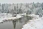An early winter snowfall in Junction Creek Valley, Greater Sudbury, Ontario, Canada.