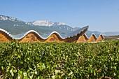 Ysios wine cellar at Laguardia, architecture by Santiago Calatrava, La Rioja, Spain