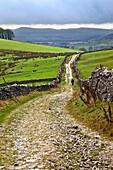 Lone Walker on Horton Scar Lane near Horton in Ribblesdale North Yorkshire England.