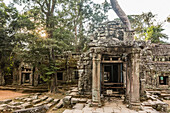 Ta Prohm Temple, being destroyed by jungle growth, Angkor, Siem Reap Province, Cambodia, Khmer.