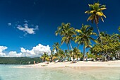 Palm fringed sandy beach of Cayo Levantado, Samana, Dominican Republic, Carribean, America,..